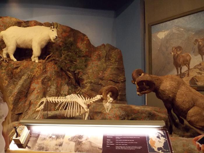 The Draper Museum