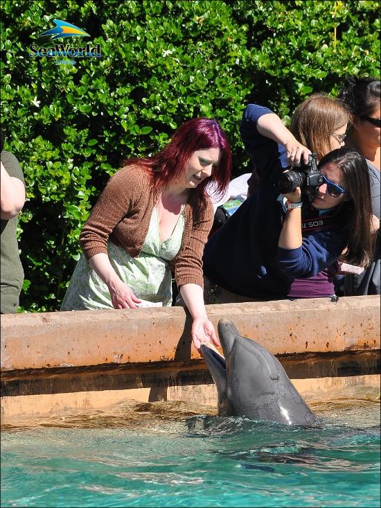 Beeb feeds a dolphin